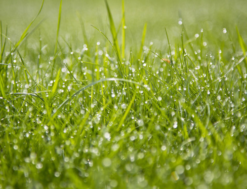 5 einfache Tipps für einen wertvollen Rasen